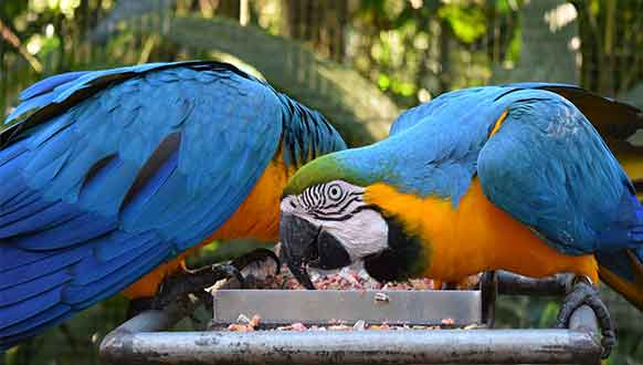 Popular Pet Bird Breeds