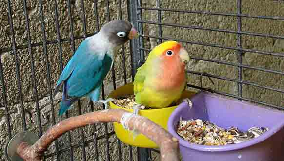 What to Feed Your Bird