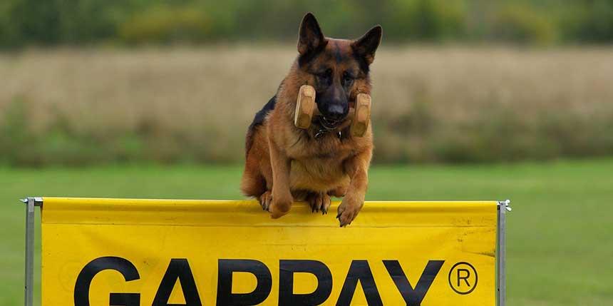Police Dog Training Tips
