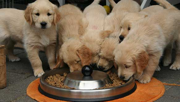 Puppy Nutrition Mistakes To Avoid