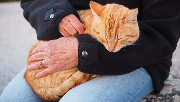 Tips to Take Care of Your Cat