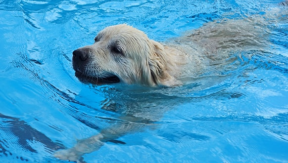 Keep your dog cool this summer with a dog swimming pool