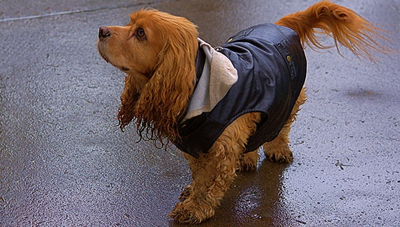 How to make a dog raincoat