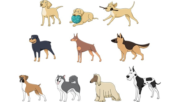 choose the perfect dog breed for you
