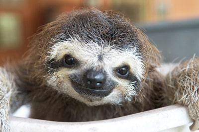 Do sloths make good pets?
