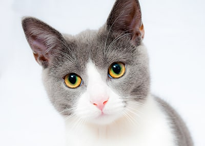 How often should i bathe my cat?