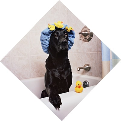 How often should I bathe my dog with skin allergies?