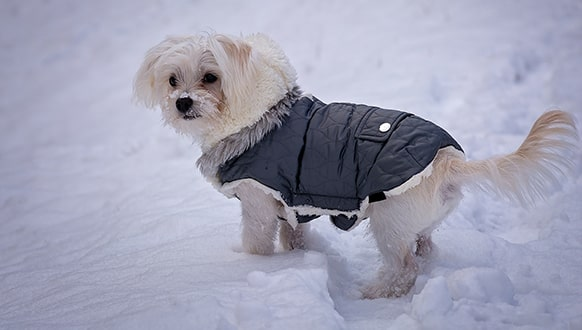 How to keep outside dogs warm in the winter