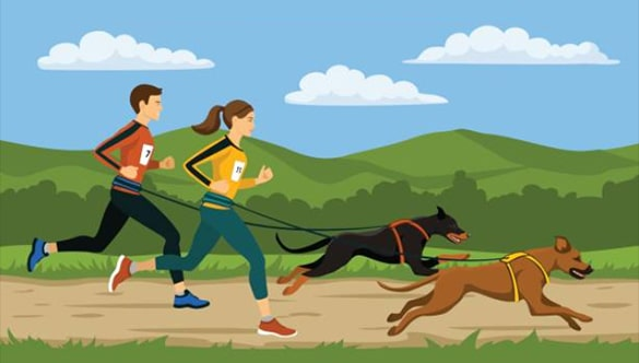 Best dog harnesses for running