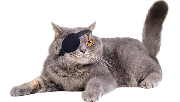 How to Make an Eye Patch for A Cat