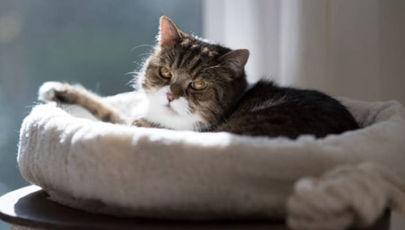 10 Benefits of Having a Cat Bed for Your Cat