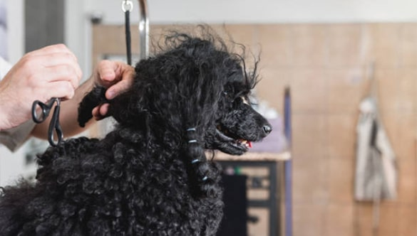 How to Cut Matted Hair On Dog