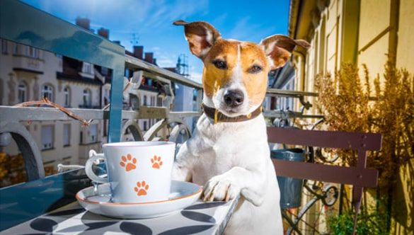 All You Need to Know About Tea for Dogs