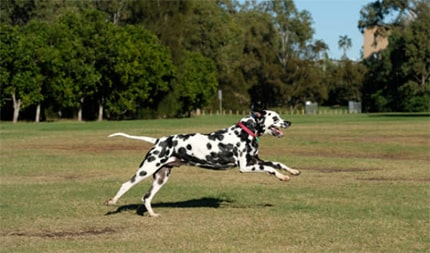 What is the least effective method to retrieve a dog that has got off leash?