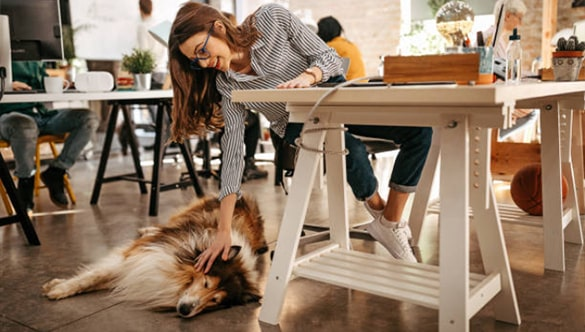 The Pros and Cons of Bringing Your Dog to Work