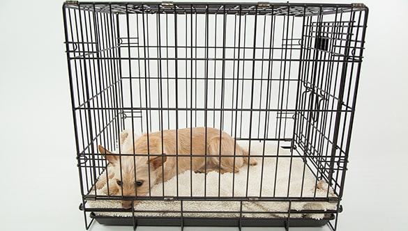 How to crate train a dog with severe separation anxiety
