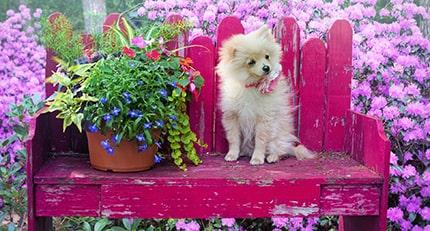 Benefits of Using Pet Sitting Service
