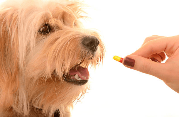 Feeding a Dog Supplement to Aid Dog Nutrition