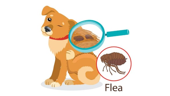 Pests That Drive Pets Crazy and What You Can Do