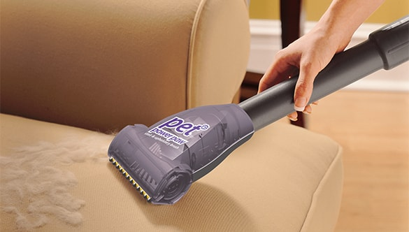 How to Remove Pet Dander from Upholstery