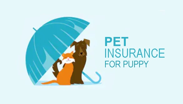 Is It Worth To Get Pet Insurance For A Puppy?