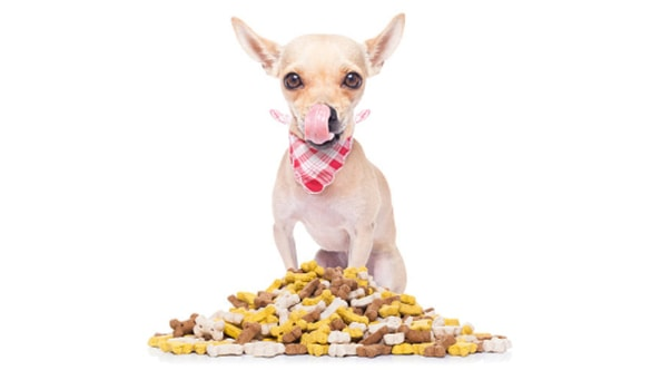 Pick The Best Treats for Chihuahuas