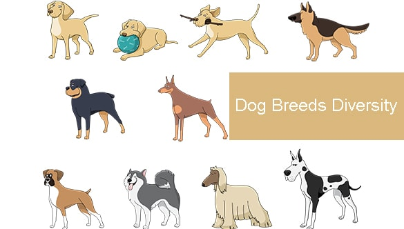 Dog Breeds Diversity – How to Choose?