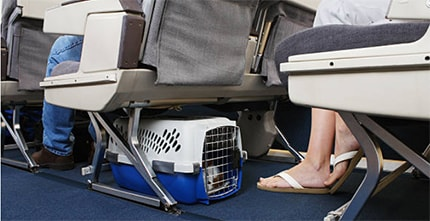 New Rules for Support Animals on Planes