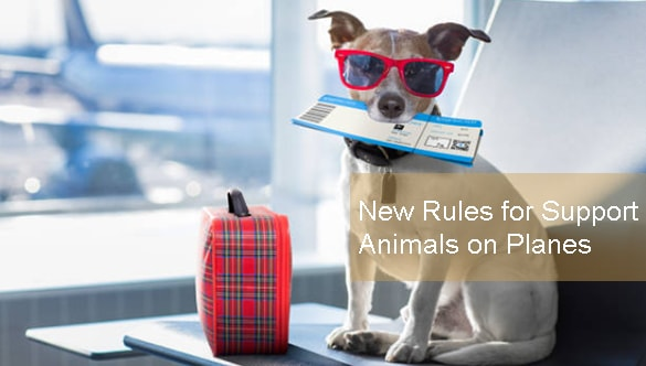 Change is in the Air: New Rules for Support Animals on Planes