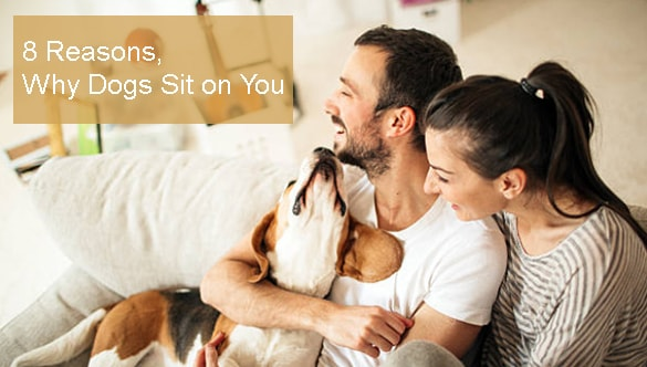 What Does It Mean When a Dog Sits on You?