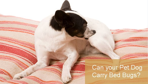 Can your Pet Dog Carry Bed Bugs?