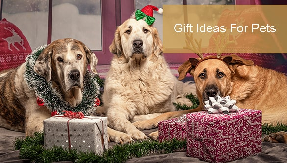 3 Gift Ideas For Your Furry Friends
