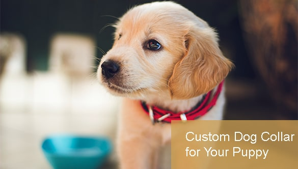 Guide to Getting a Custom Dog Collar for Your New Puppy