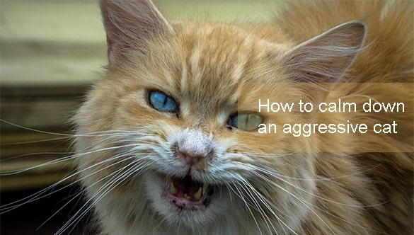 How To Calm Your Fearful Or Aggressive Cat