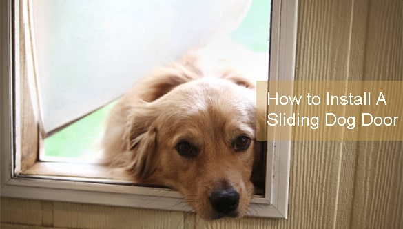 Comprehensive Guide on: How to Install A Sliding Dog Door