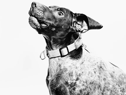 things you should know before adopting a rescue dog