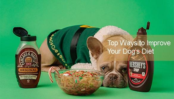 Top Ways to Improve Your Dog's Diet