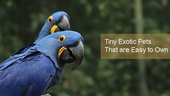 4 Tiny Exotic Pets That are Easy to Own