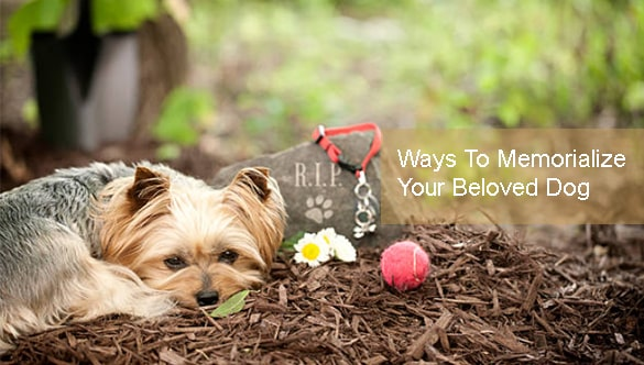 10 Out Of The Box Ways To Memorialize Your Beloved Dog