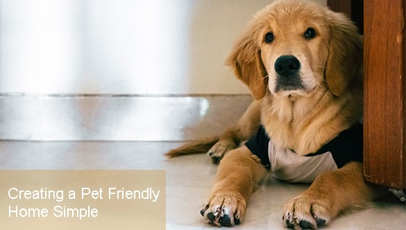 The Brief Guide That Makes Creating a Pet Friendly Home Simple