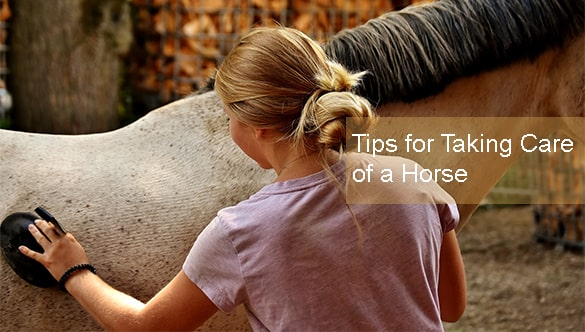 4 Experts Tips for Taking Care of a Horse