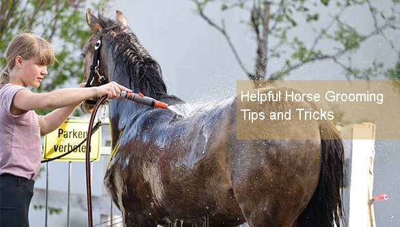 4 Helpful Horse Grooming Tips and Tricks