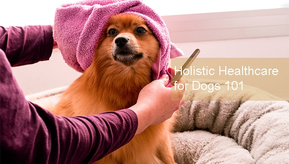 Holistic Healthcare for Dogs 101