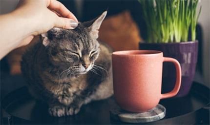 Ways to Treat Cat Anxiety
