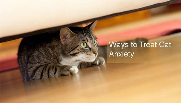 3 Easy Ways to Treat Cat Anxiety