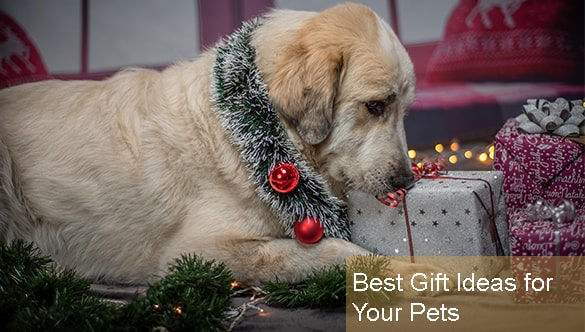 6 Best Gift Ideas for Your Pets