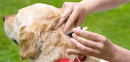 How to Prevent Dog Ticks