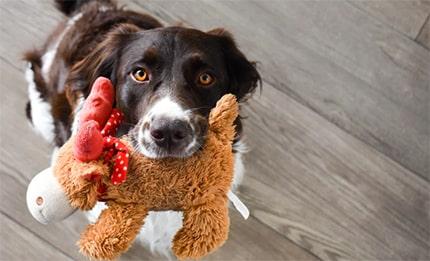 Puppy Behavioral Aid Toy